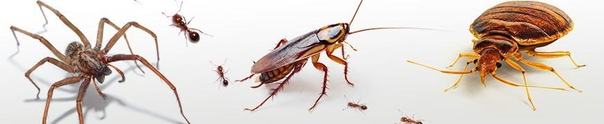 INSECTICIDES ANTI-RAMPANTS : Lutter contre les cafards, araignées...