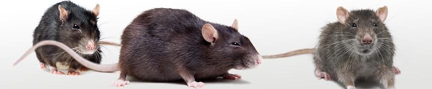ANTI-RATS : Notre gamme complète de dératisation