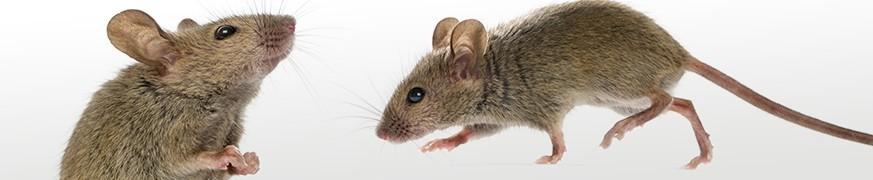 Anti-souris : nos produit pour lutter contre les rongeurs